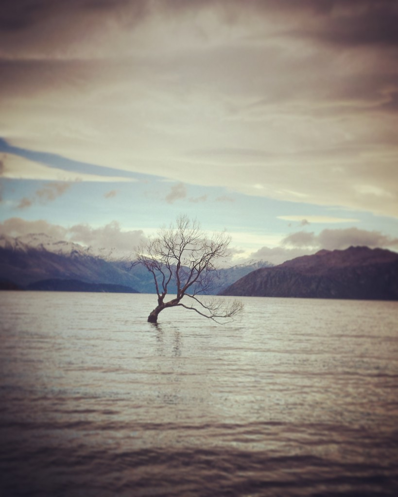 That Wanaka Tree 2
